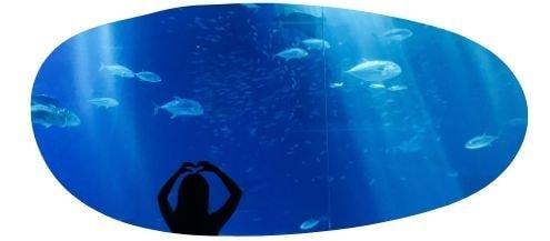 A public aquarium
